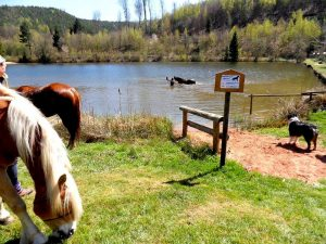étang de baignade pour vos chevaux